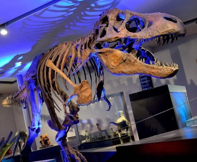 T-Rex Newcastle