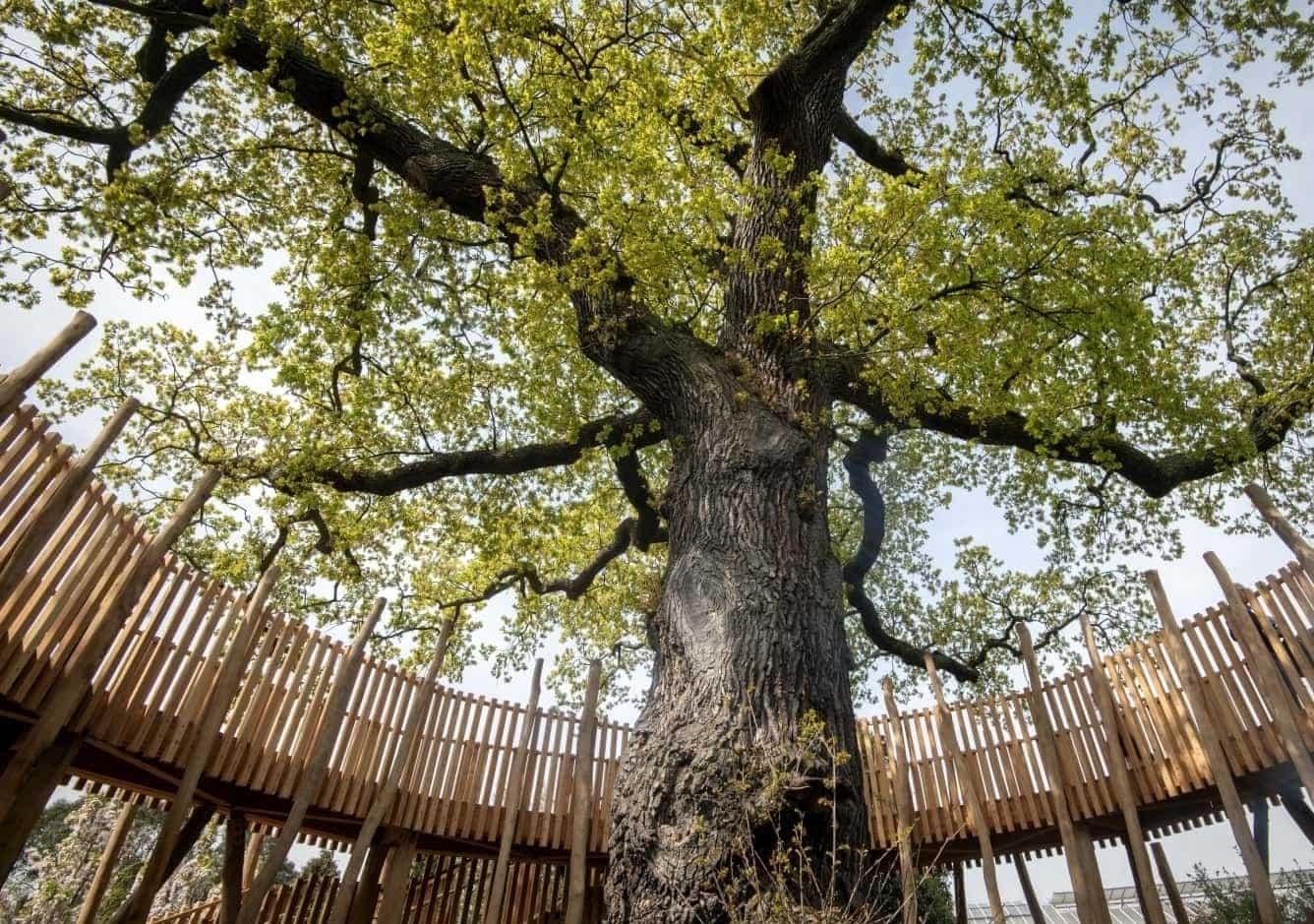 Oak Circle Kew