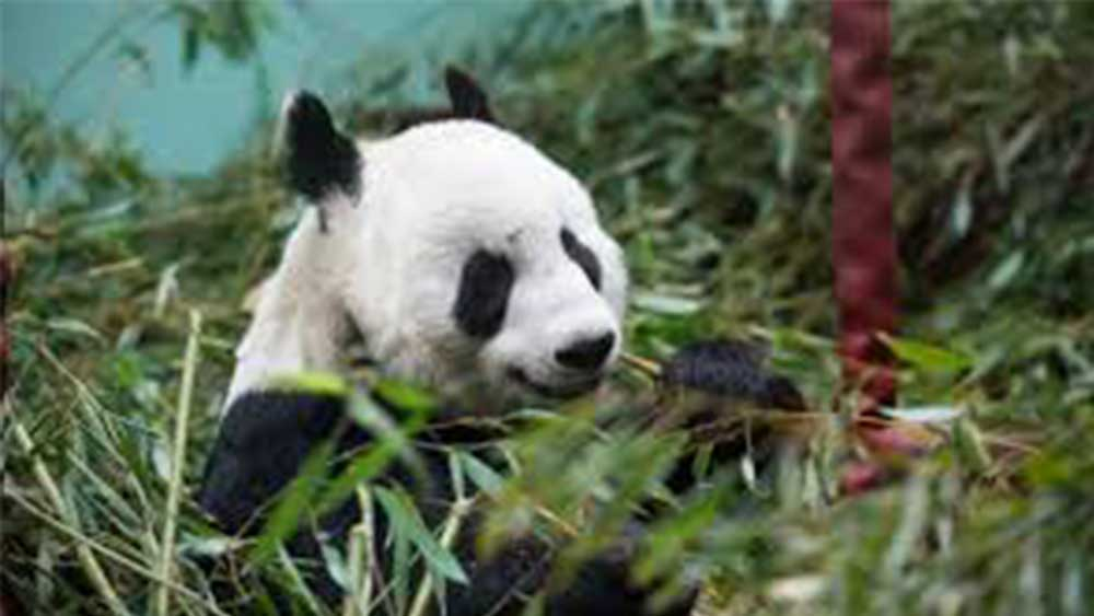 Edinburgh-Zoo.jpg