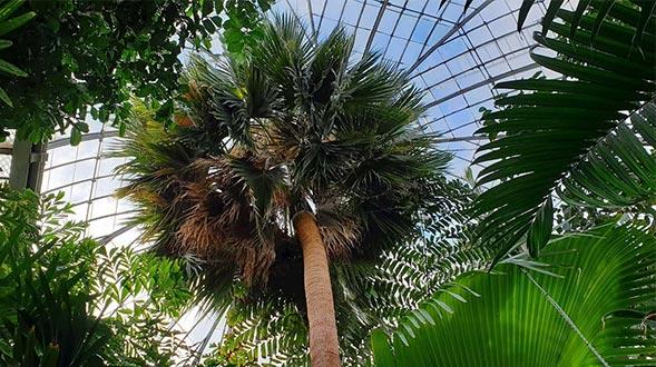 Royal-Botanic-Gardens-Edinburgh-Spotlight.jpg